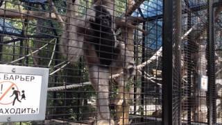 Смешные обезьяны Новосибирский зоопарк.Funny monkey.Интересное видео про животных.