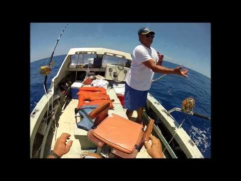 Rigging & Fishing For Blue Marlin With Live Tuna