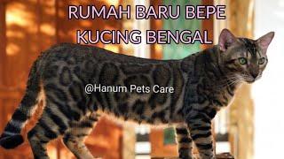 Tempat Baru Bepe Kucing Bengal Aceh
