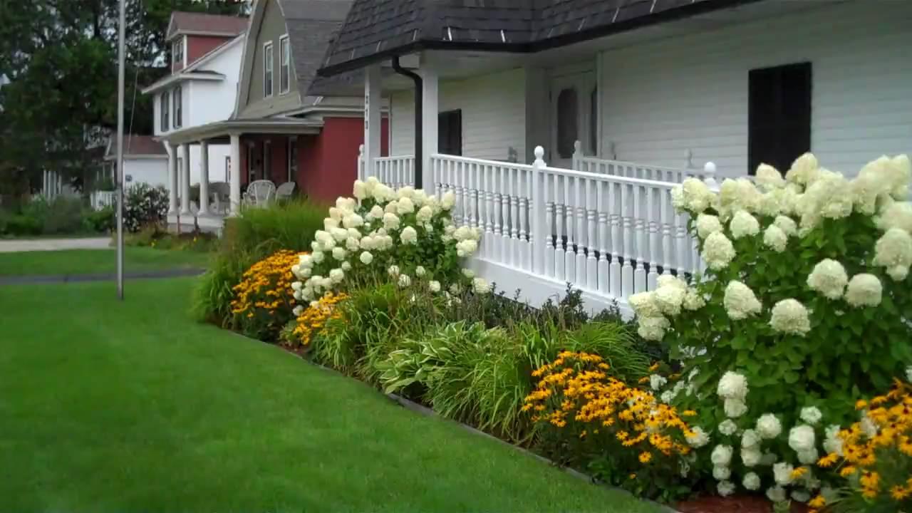 limelight hydrangea in landscape