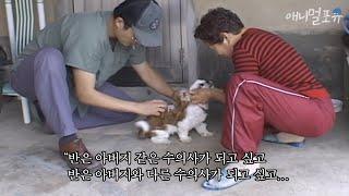 동물도 치료하고 사람 마음도 지키는 시골의 반려동물 수의사 ⑤ KBS 인간극장 061110 방송