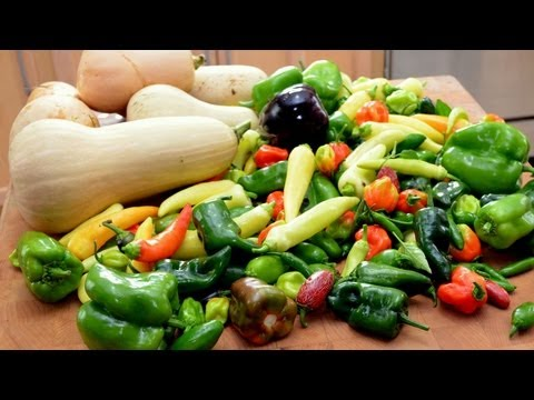 Early Fall Vegetable Garden Tour & Harvest