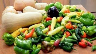 Early Fall Vegetable Garden Tour & Harvest