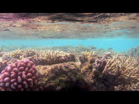 Delos Explores the Tuamotu Archipelago, Part 1- Sailing SV Delos Ep. 8
