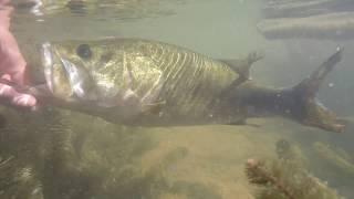 Kayak Bass Fishing- Top Water Heaven!!