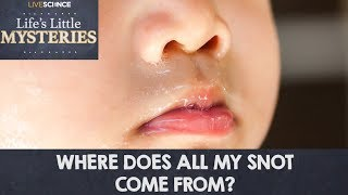 Where Does All My Snot Come From?