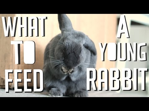 What To Feed A Young Rabbit