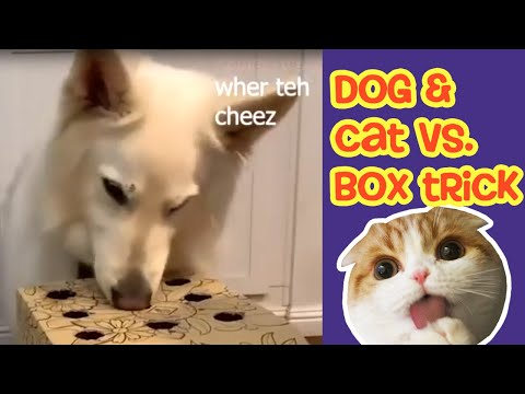 Cat vs Dog Reaction to Box Trick