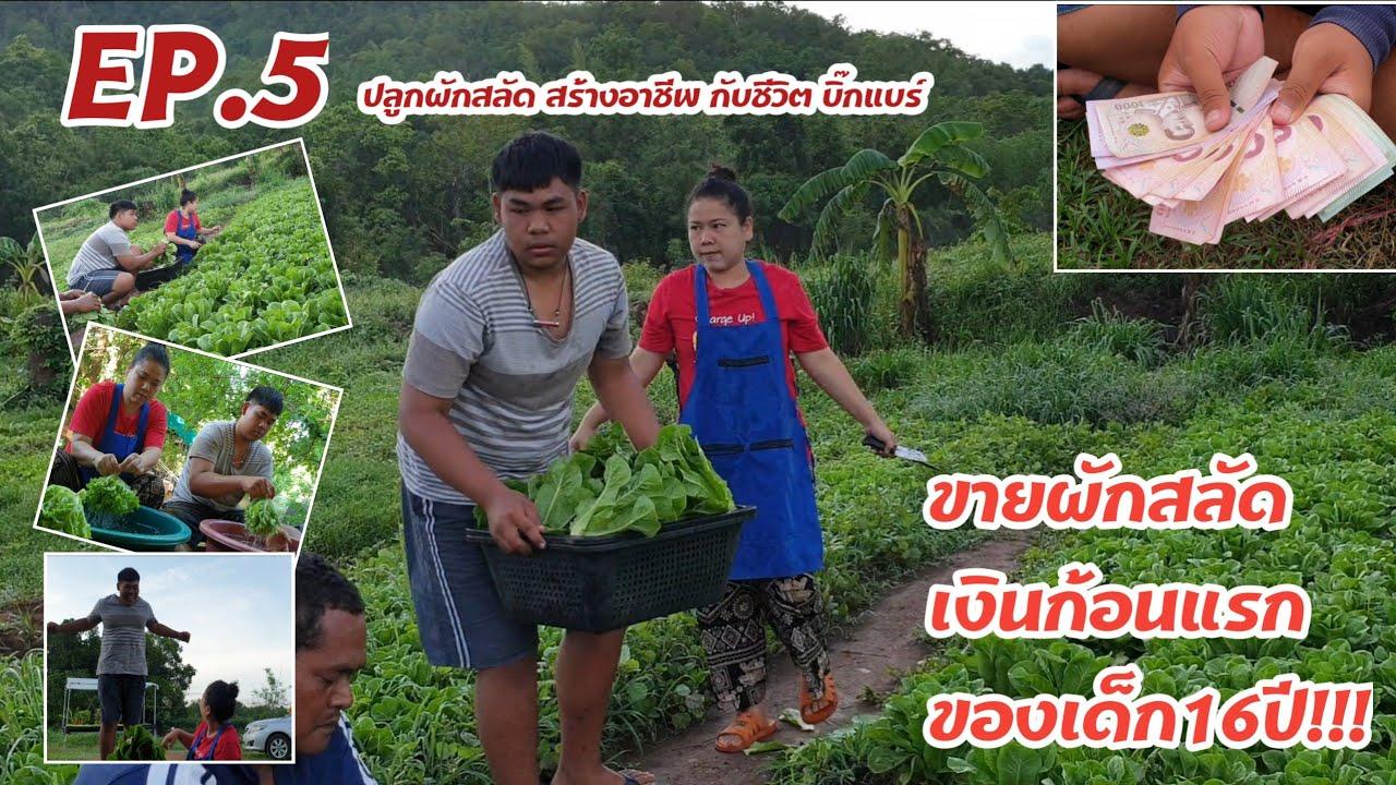 ep.5 ขายผักสลัดกับเงินก้อนแรกของเด็กอายุ16 #หมูอ้วนชวนทำเกษตร