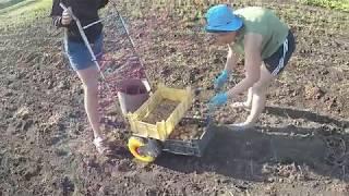 Урожай картофеля 2019 уборка под мотоблок картофелекопалкой