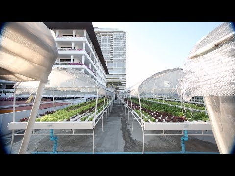 This Helipad in Bangkok has been Transformed into a 4000 sqm Hydroponic Farm