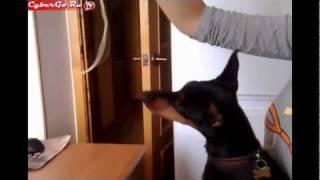 Собака-макароны-пожирака