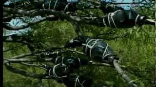 PARTE 1 El Acodo Aéreo, una técnica para la propagación de plantas de mezquite
