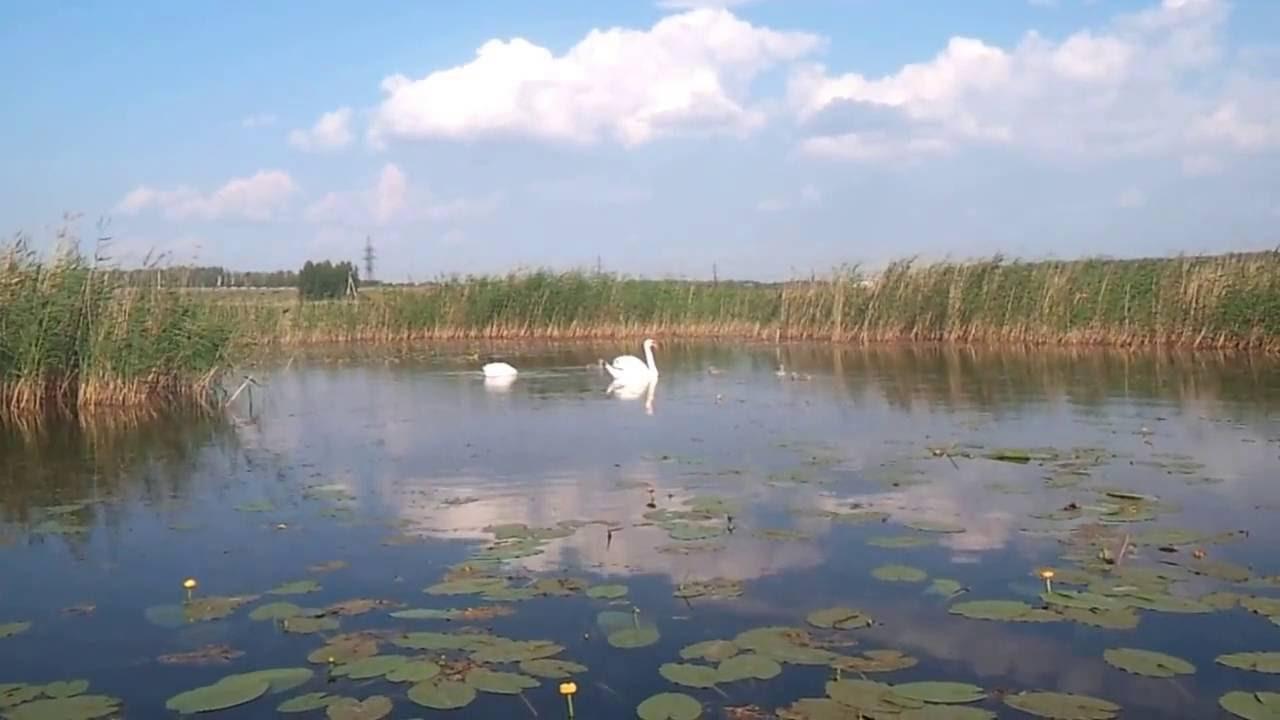 Прогноз клёва рыбы в селе Кременкуль