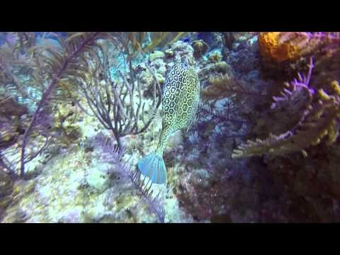Cayman 2014 - GoPro Hero 4 Black