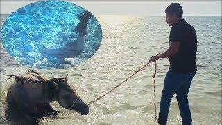 HD p1080 خيل وبحر وغوص - رحلة يوم ونص بشاطئ الرمال البيضاء مختصرة ب38 , لا يفوتكم الفيديو !