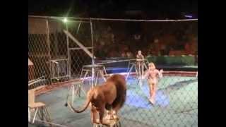 サーカスでライオンが突然、男性調教師に襲いかかります。 女性調教師が...
