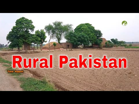 Village Life In Pakistan Daily Routine Work in 2020