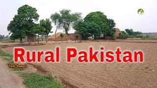 Деревенская жизнь в Пакистане Ежедневная рутинная работа в 2020 году