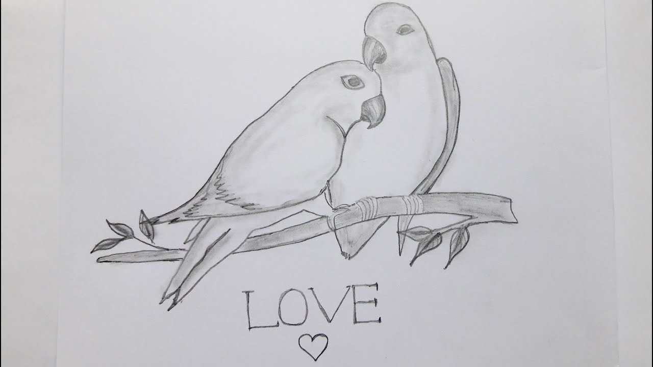 Couple Bird Sketching Easy Way To Draw Couple Birds Youtube