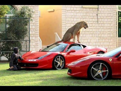 WOW... SuperCar di garasi dijaga Singa Putih langka di Qatar
