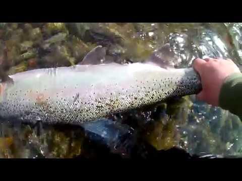 Pontoon Fishing For Steelhead| Awesome Day