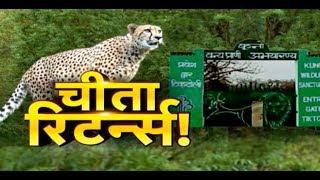चीता-शेर के लिए कितना तैयार 'कूनो' ? 'कूनो' में होगी चीतों की वापसी ! PADTAL