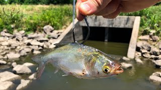 Fishing GIANT LIVE Baits in a Tiny CREEK SPILLWAY!!!