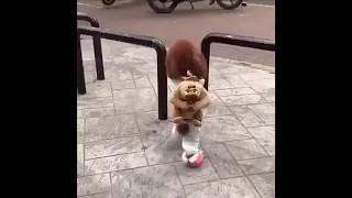საყვარელი ცუგა /  Lovely Puppy