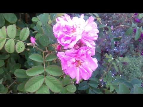 Repeat flores de campanillas azules by majaillaflor - You2Repeat