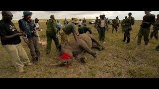 WWF working with KWS to protect Kenya's rhinos