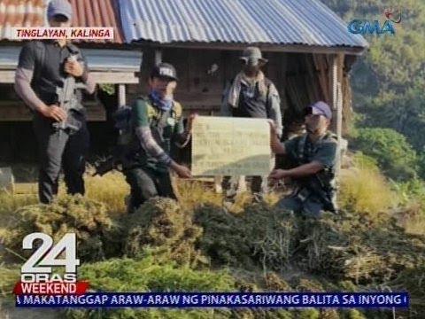 P26.5M halaga ng umano'y halaman at pinatuyong dahon ng marijuana, nakuha sa bundok ng Kalinga