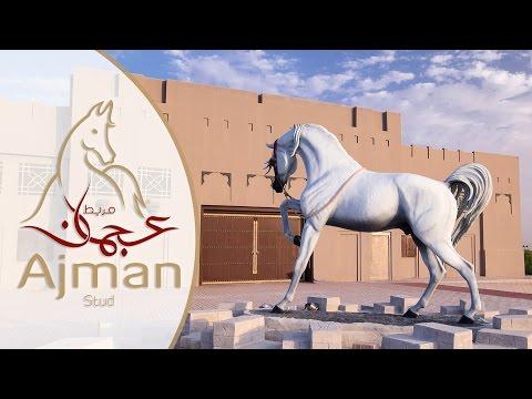 UAE: Ajman Stud Timelapse/Hyperlapse