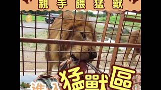 九州自然動物園親手餵猛獸│01親子