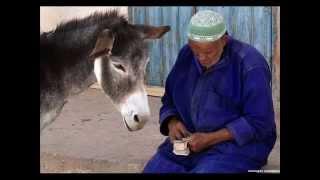 Mouton Sardi maroc 2015