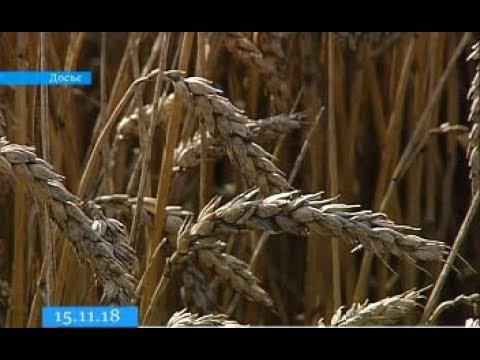 ТРК ВіККА: Черкащина у трійці областей-лідерів в Україні за рівнем урожайності зернових