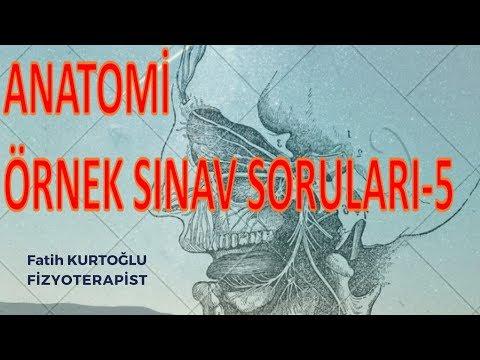 Konu Özetli-Eklemler | Anatomi Öğreten Örnek Sınav Soruları 5