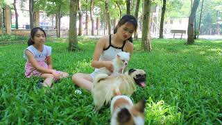 Lovely smart girl Playing Baby Cute Dogs On Rice Fields || How to play with dog & Feed baby dogs