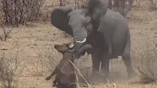 TOP 5 การปะทะโหดแผ่นดินสะเทือนของช้าง Elephant VS Buffalo Hippo Lion Crocodile