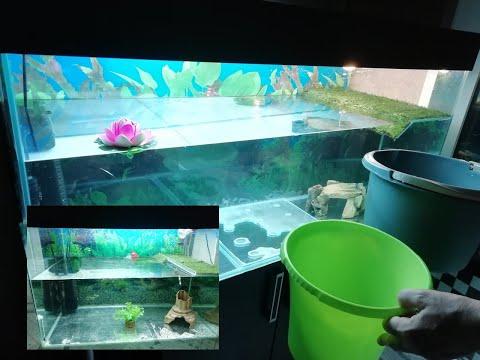 Красноухие черепахи. Как правильно чистить большие аквариумы. Мой метод.