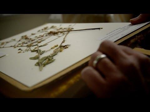 Head Room: The Herbarium