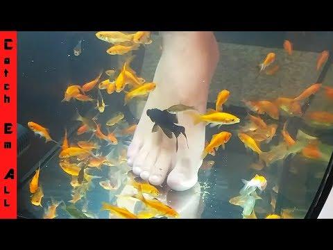 PET FISH FOOT SPA! **Fish Pedicure DIY**