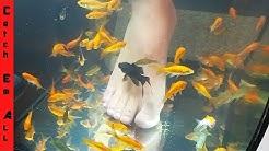 PET FISH FOOT SPA! **Fish Pedicure DIY**