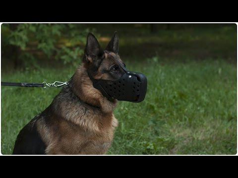 Smartest and fiercest dog in the world german shepherd