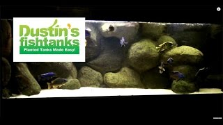 How to keep cichlids. Bryan Aquarium update on a Sunday.