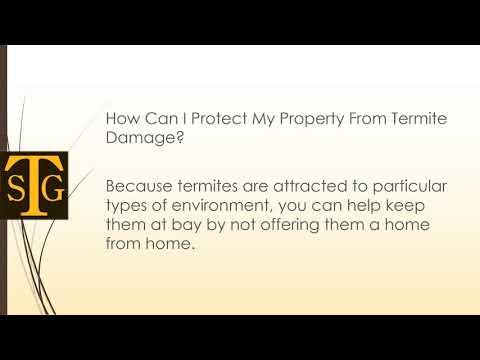 Does Homeowners Insurance Cover Termite Damage | The Sena Group | Boca Raton, FL