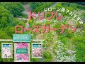 4K『ドリプレ ローズガーデン』ドローン空撮 DJI Goggles Japan