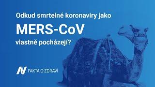 Odkud smrtelné koronaviry jako MERS vlastně pocházejí?