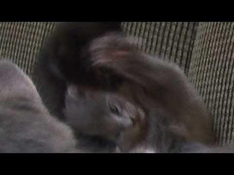 Kitten Tackle