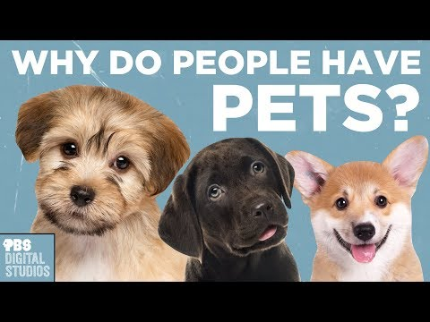 Why Do People Have Pets?